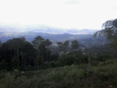 foto sekitar puncak kana